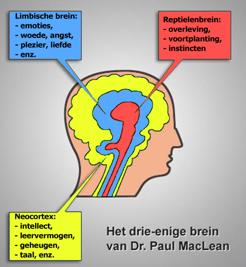 Brein bewegingspatronen